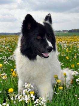 printemps chien
