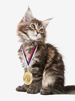 chaton médaille