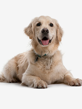 article chien toxique